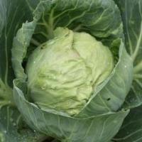 White cabbage 2674980 640